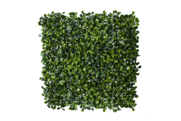 boxwood greenery wall / panel